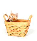 Katz im Korb
